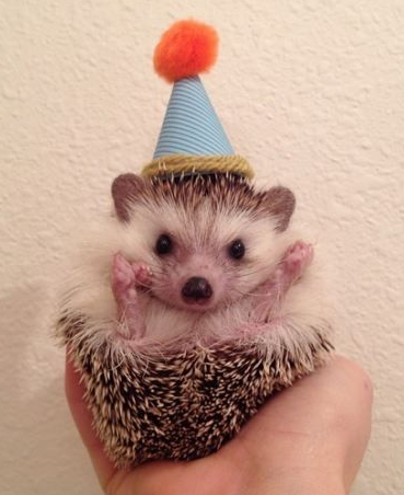 hedgehog in party hat